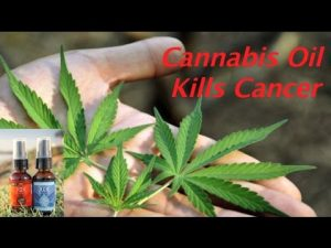 cannabis oil for cancer treatment